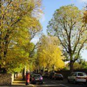 紅茶の国から:秋の森へお散歩に
