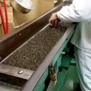 業務用紅茶にとって大切な工程「異物の除去」